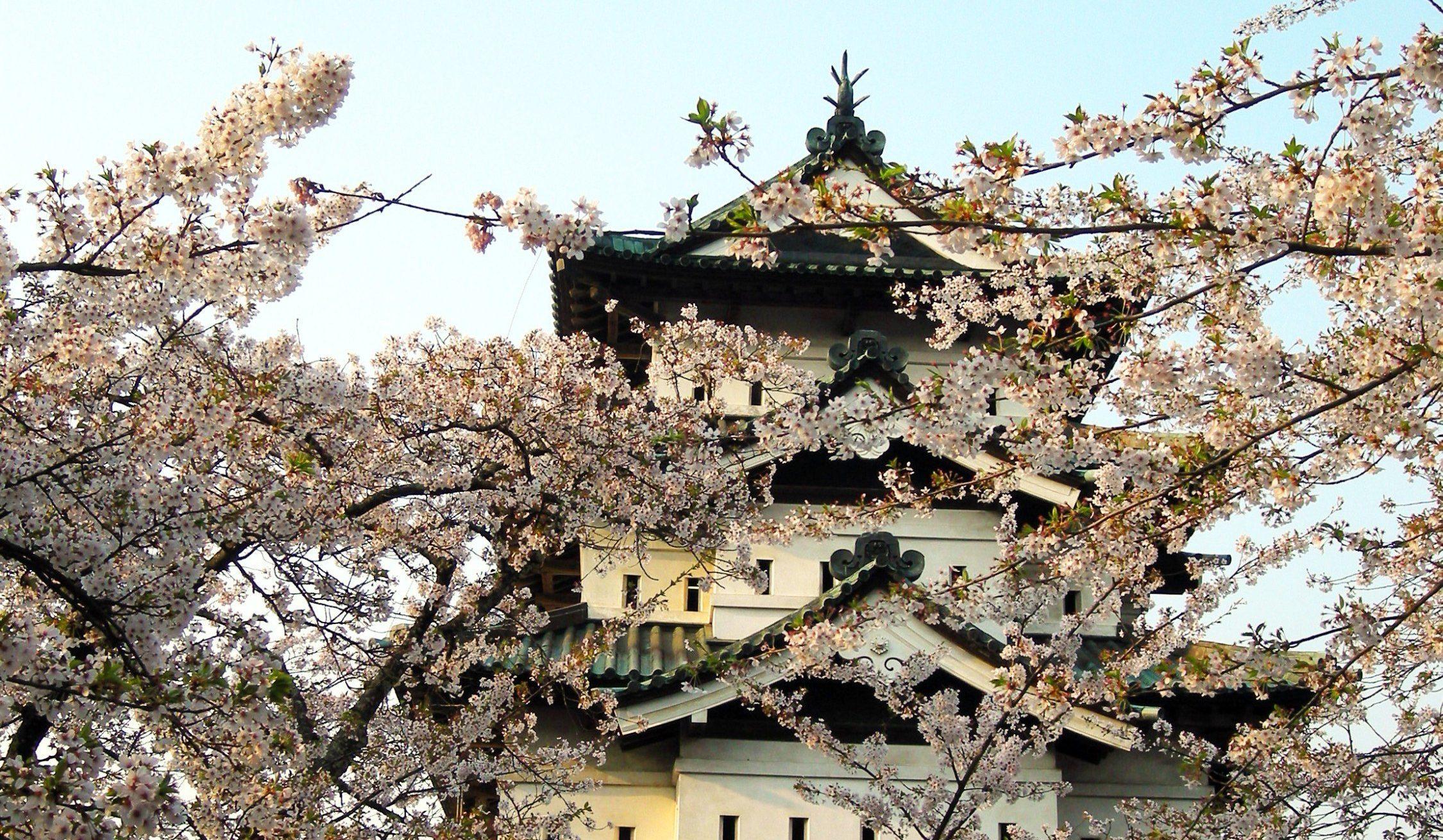 Japan Tourist Spots Cherry Blossom