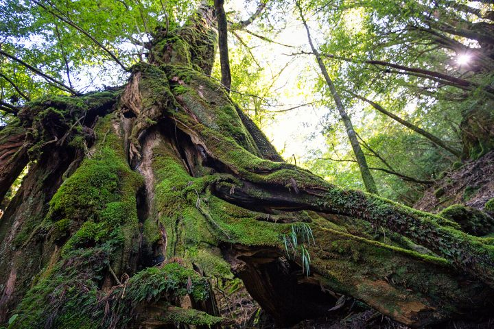 Close-up of tall tree looking verdant and lush with moss