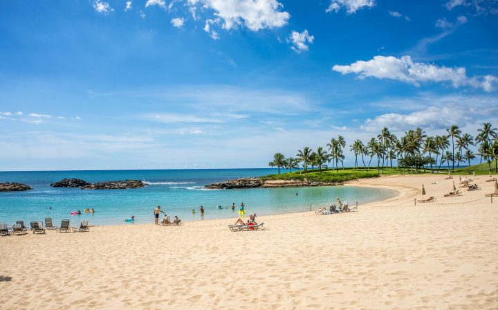 Blue waters at a Hawaiian beach, with palm trees dotting the edge of the sand