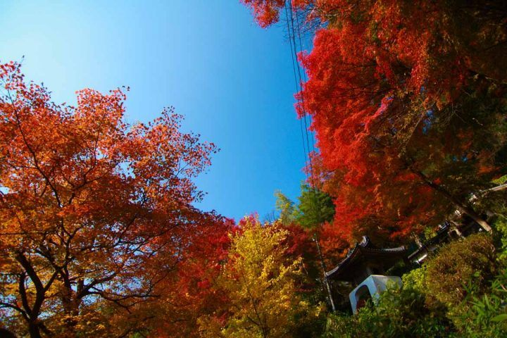 Misasa's autumn colours
