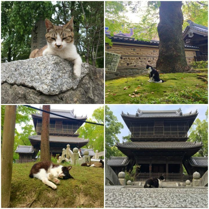 The temple cats relaxing at Shofokuji Temple, Fukuoka, Japan