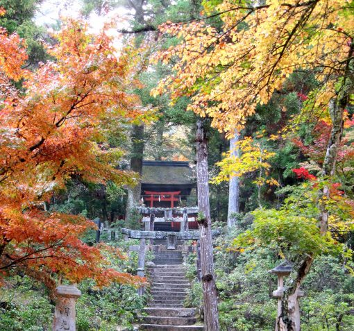 "Miyajima ""Maple Valley"" - Autumn leaves in Japan"