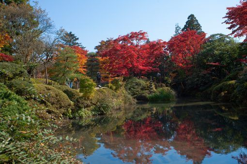 Autumn leaves in Japan in front of a lake