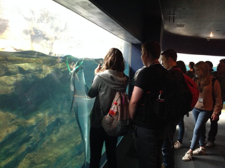 Teenagers on a school trip looking at marine life in Japan