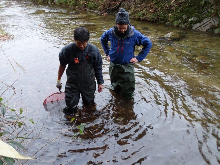 Wading in search of the Japanese giant salamander