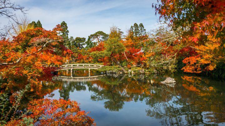 Autumn leaves (koyo) in Japan