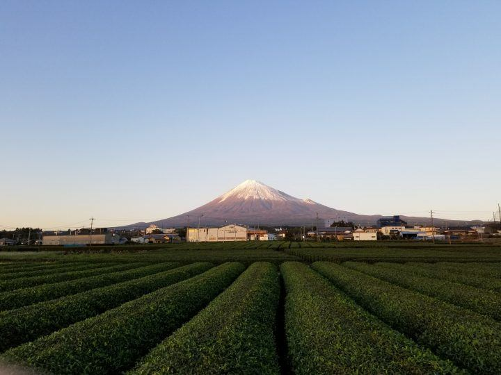 View of Mount Fuji with tea plantations in Japan