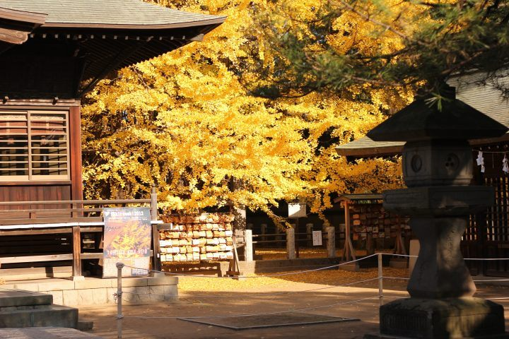 Fall, autumn leaves in Japan