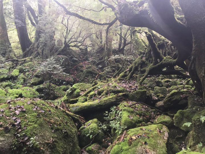 Shiratani forest, Yakushima, Japan