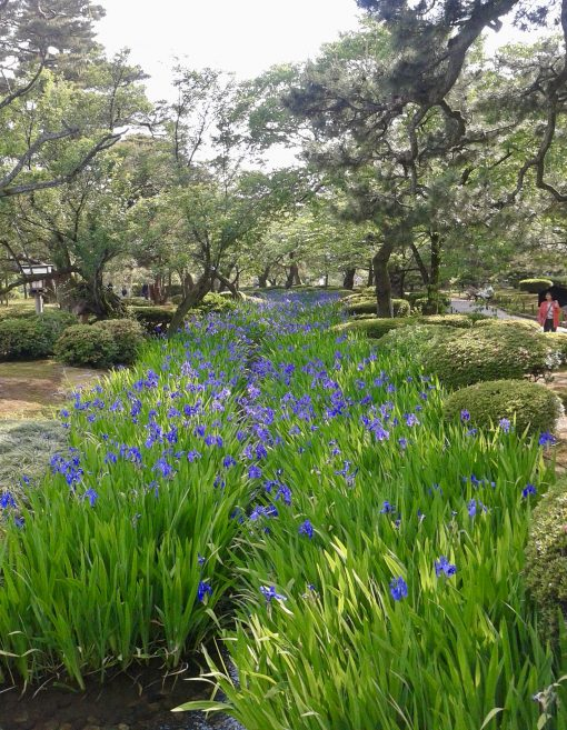 Spring in Kanazawa
