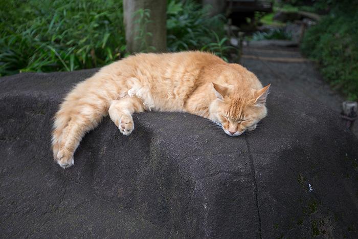 japanese wildlife cat island Tashirojima