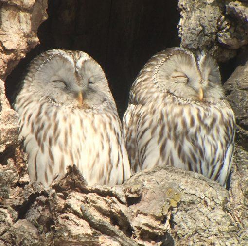 shirnrin yoku forest bathing owls