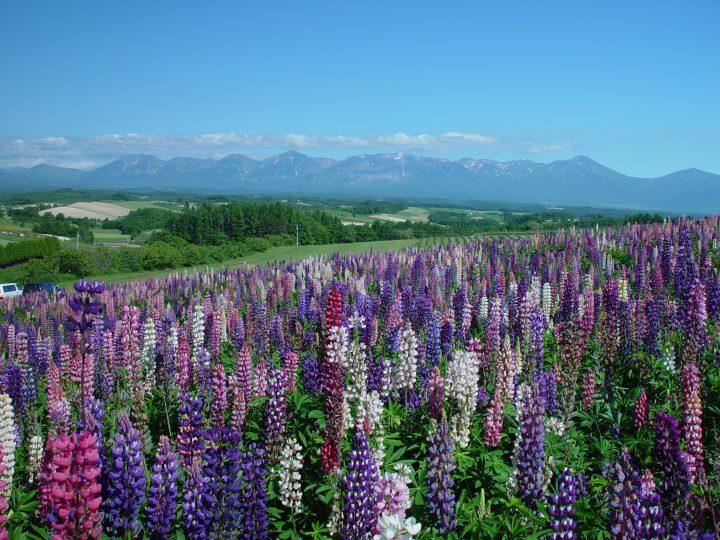 hokkaido flowers view nature