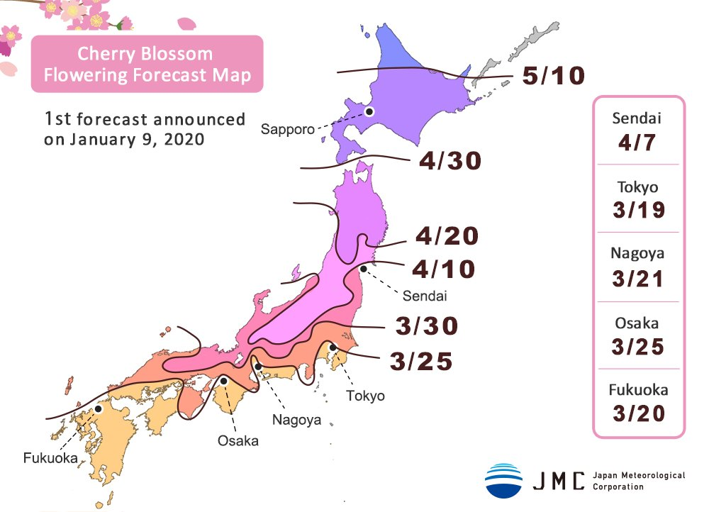 cherry blossom forecast map