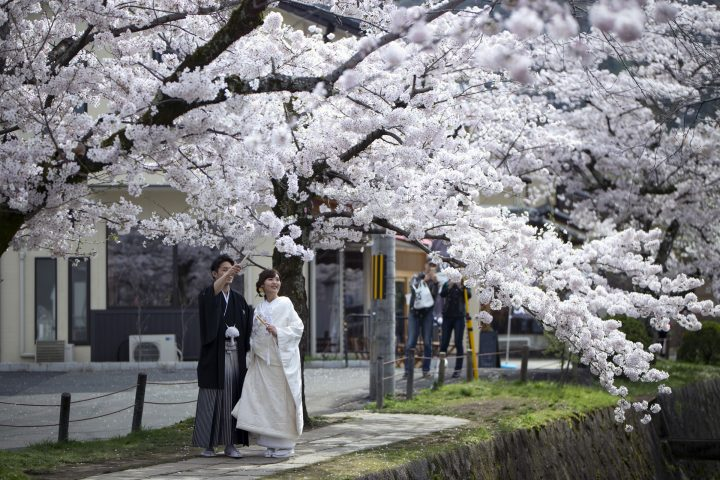 Shinto Wedding Pictures Insidejapan