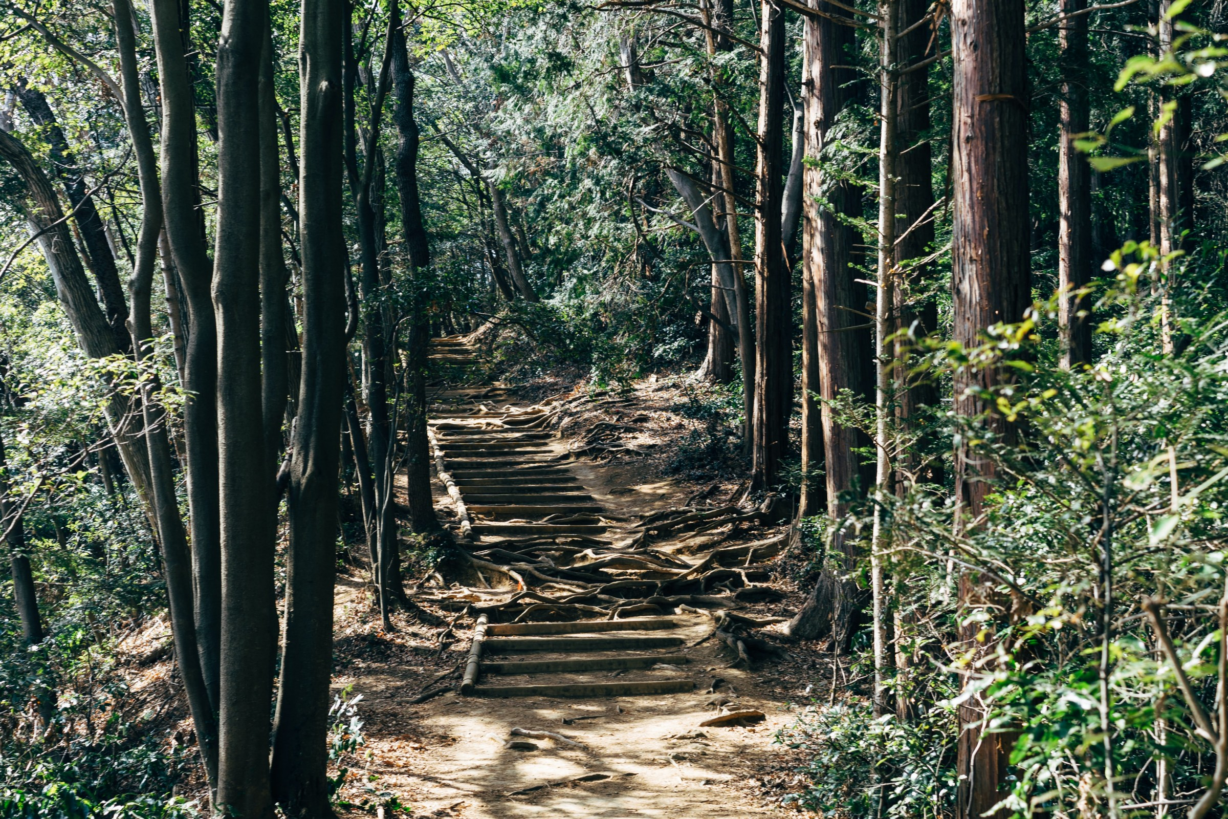 A forested walking route at Mount Takao