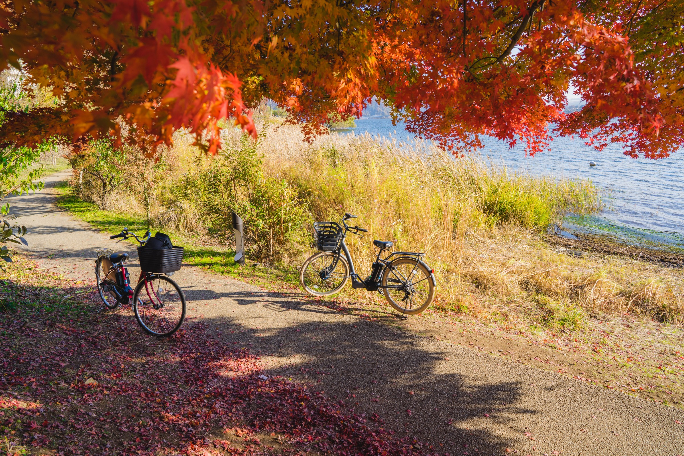 Bicycles on the lake shore at Kawaguchiko