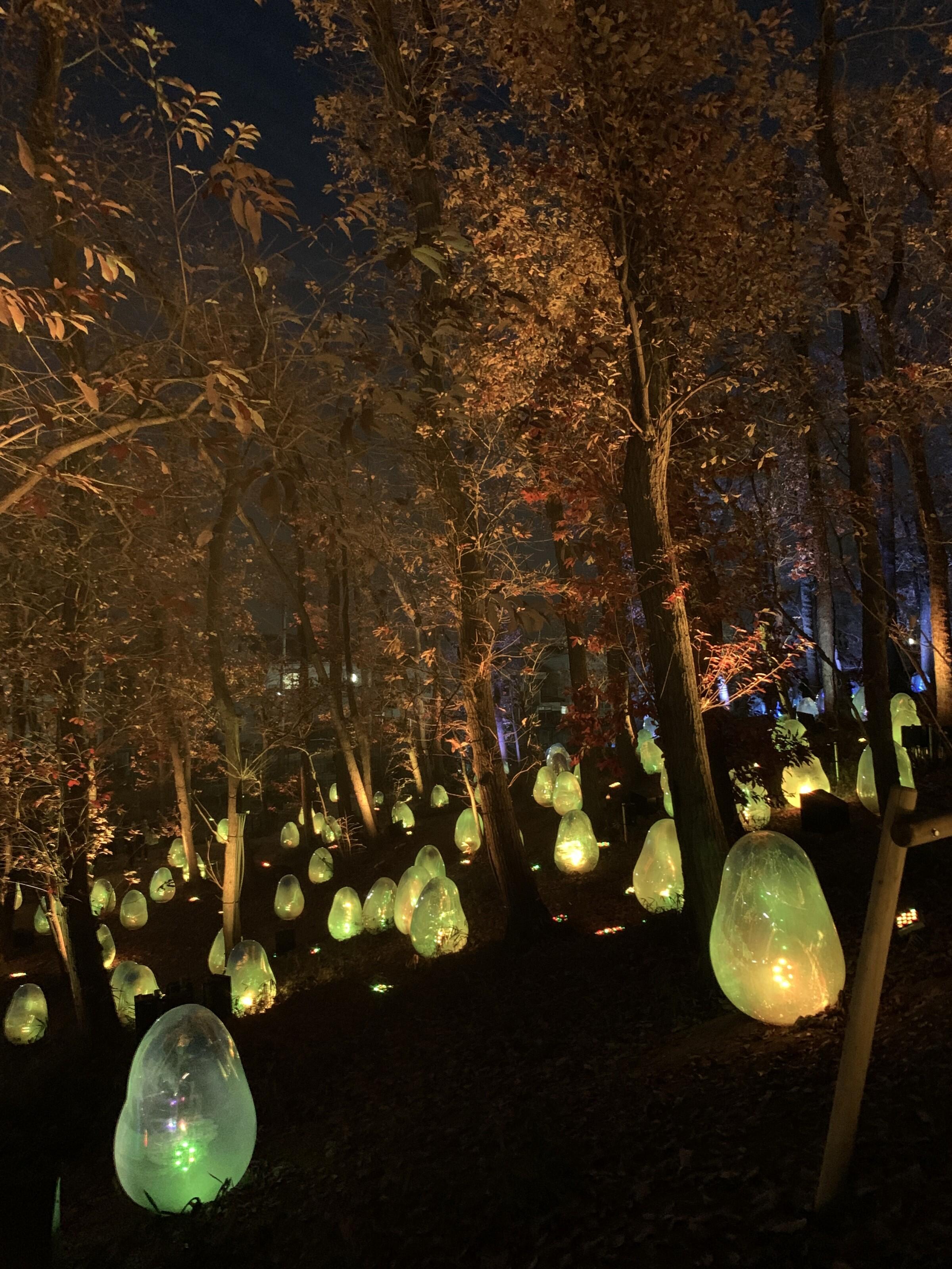 The Acorn Forest teamLab exhibit
