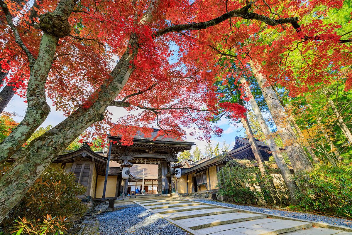 Mount Koya in autumn